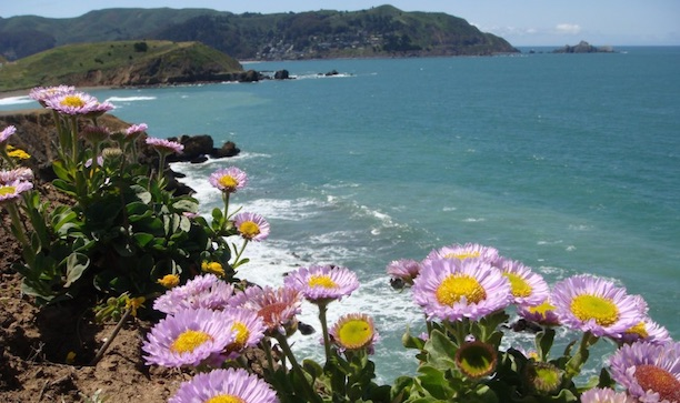 Wild Flowers Pacifica