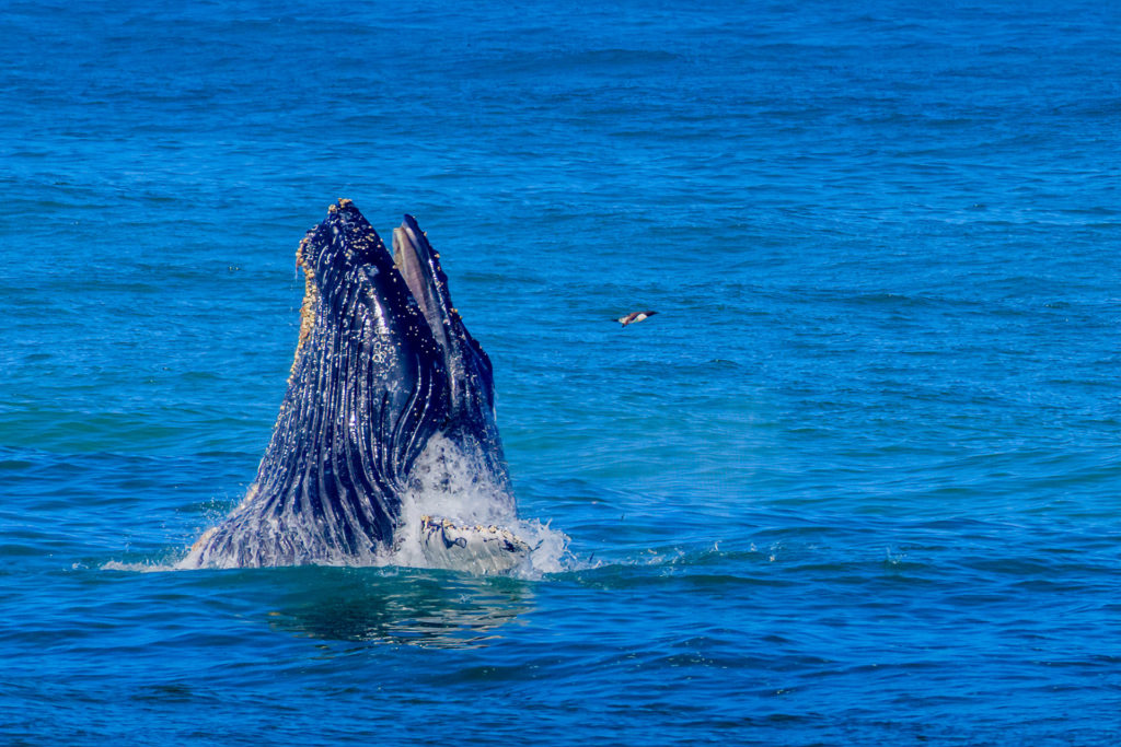 Get Out of the House...Go Whale Watching!