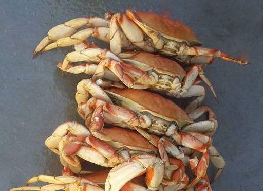 Feeling Crabby?
