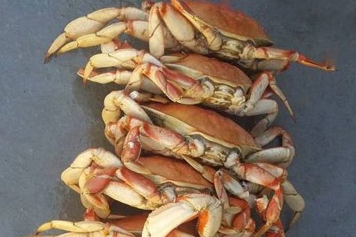 Pile of Crabs